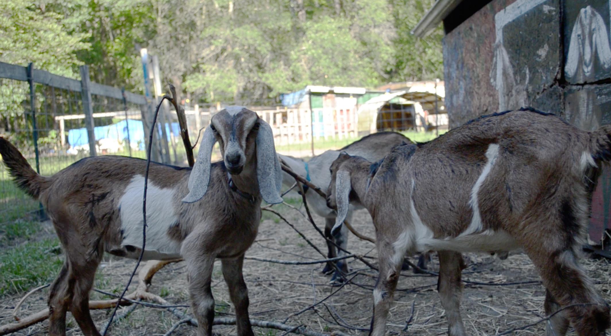 Jeremiah Farm   A Living Testimony to God's Provision